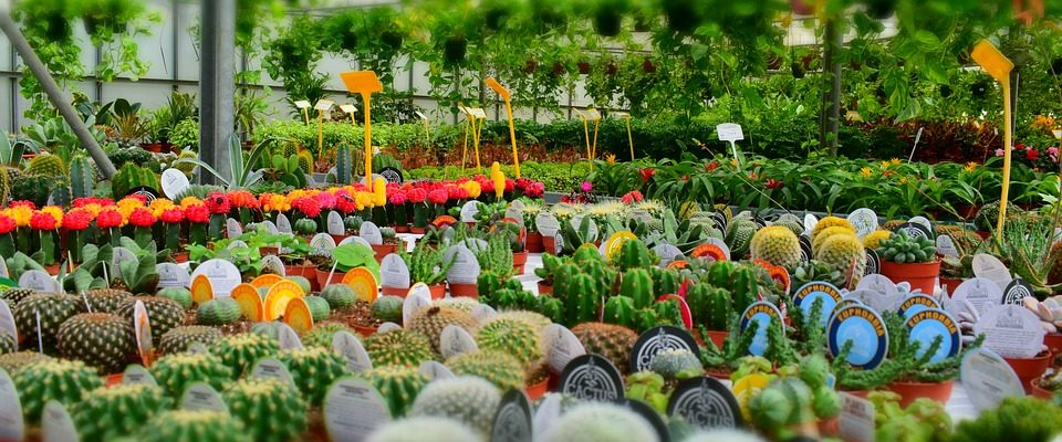 coronavirus ouverture jardinerie