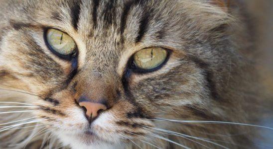danger jardin chat