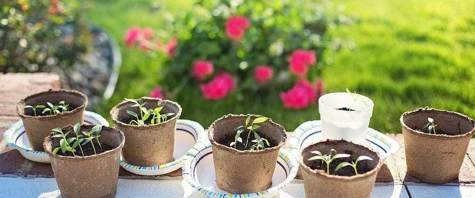jardiner pendant le coronavirus
