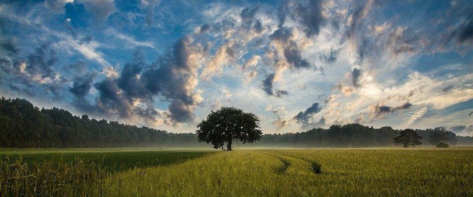 Offrir un arbre avec Ecotree