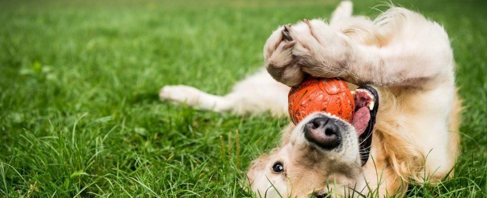 traiter eczéma chien