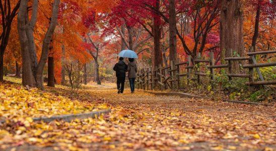 Voyage automne
